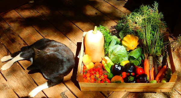 Cat & Veggie basket
